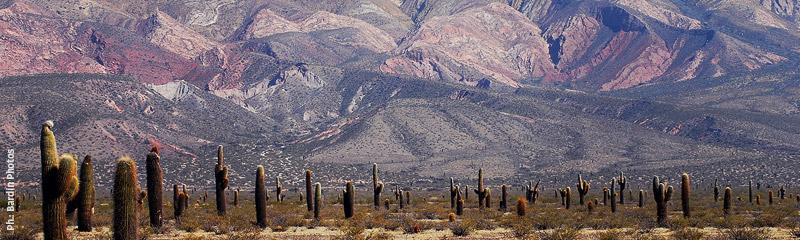 Parque Nacional Los Cardones Salta