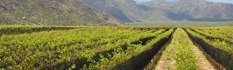 Cultivo La Rioja