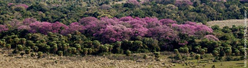 AGuara Guazu, la puerta de entrada a los esteros del ibera