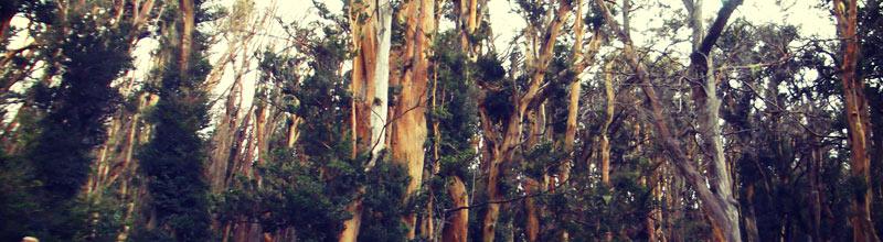 El bosque de arrayanes, uno de esos lugares imborrables de la memoria! Salido de un cuento de Disney!