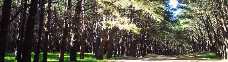 El parque Miguel Lillo uno de los puntos ineludibles de Necochea