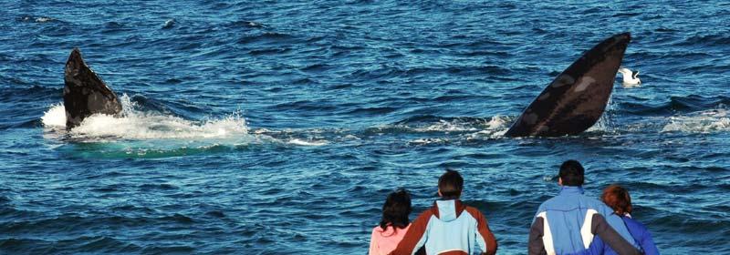 Ballenas en El Doradillo, Puerto Madryn