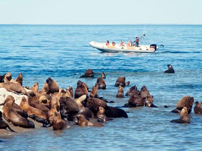 Avistaje de fauna marina, verano en Puerto Madryn