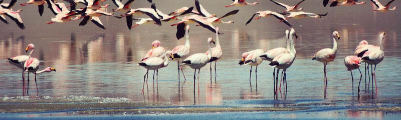 Laguna Diamante, hábitat de flamencos rosados en el volcán Galán