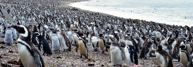 Ejemplares sobre la costa, Chubut