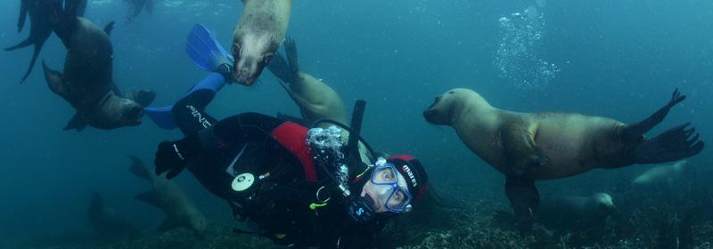 snorkeling con lobos marinos, verano en Puerto Madryn