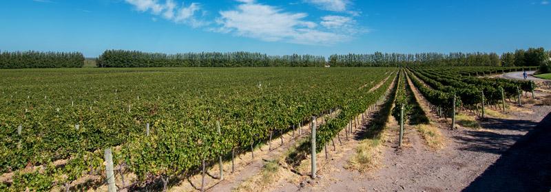 La Ruta del Vino de la Patagonia, Neuquén y Río Negro