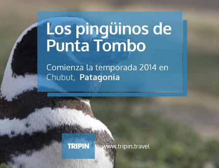 Comienza una nueva temporada de avistaje de pingüinos en Punta Tombo, Chubut!