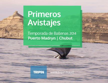 Primeros avisatajes de Ballenas de 2014 en Puerto Madryn, Chubut