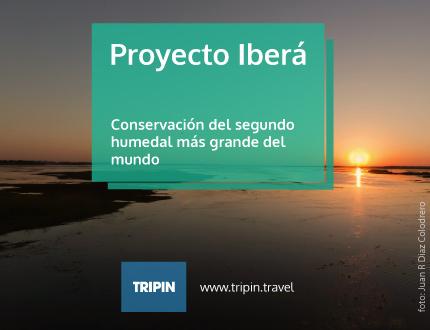 Proyecto Iberá, una organización que promueve la conservación de los Esteros del Iberá