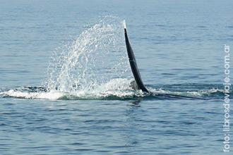 Puerto Madryn y el espectaculo único del avistaje de ballenas por libros de viaje