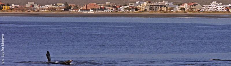 Libros de Viaje, en Puerto Madryn