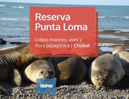 Reserva Punta Loma en Puerto Madryn, Chubut