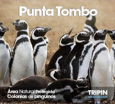 Punta Tombo recibe a los pinguinos