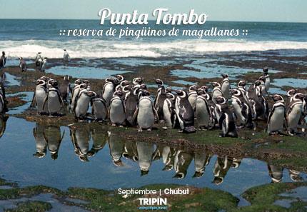 Punta Tombo en Chubut