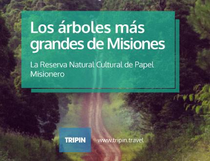 Reserva Natural y Cultural del Papel Misionero, los árboles más grandes de Misiones