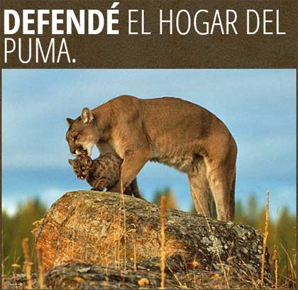 Junto a Greenpeace, Salvemos la Reserva San Guillermo