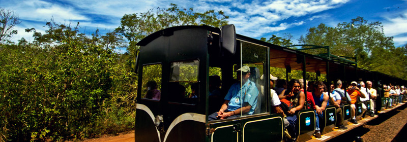 Tren de la Selva, Misiones