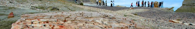 Bosque Petrificado Ormaechea en Chubut