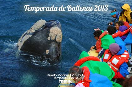 Temporada de Ballenas 2013 en Madryn