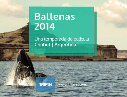 Ballenas 2014, una temporada de película