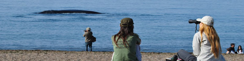 El doradillo, una de las opciones para el avistaje de ballenas