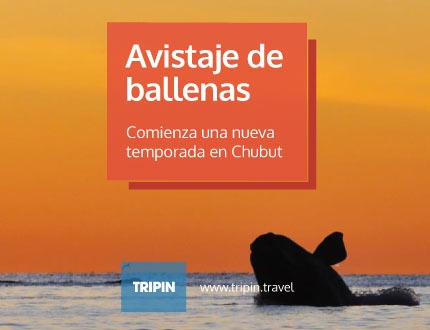 Comienza una la Temporada de Ballenas 2017 en las costas de Chubut