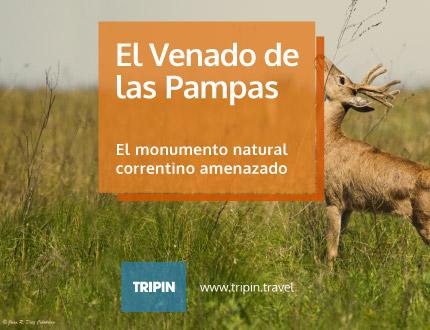 El venado de las pampas, el monumento natural correntido bajo amenaza