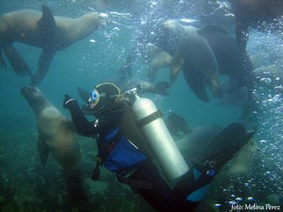Península Valdés ideal para experimentar sensaciones nuevas con el buceo