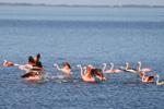 Flamencos en Lago Epecuén