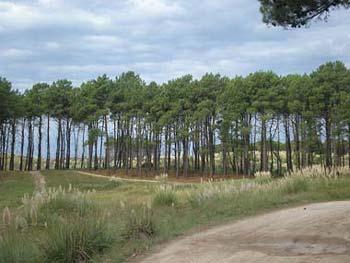 Estación Forestal Ing. A. Paolucci