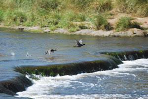 Río Quequén