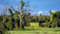 Reserva Guaycolec