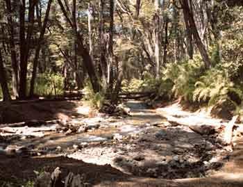 Reserva Natural Centenario