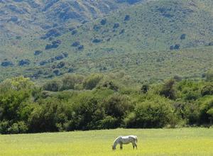 Quebrada del Tala