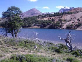 Monte Forestal Zeballos, Los Antiguos